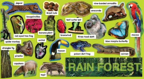 Why are rain forests s...